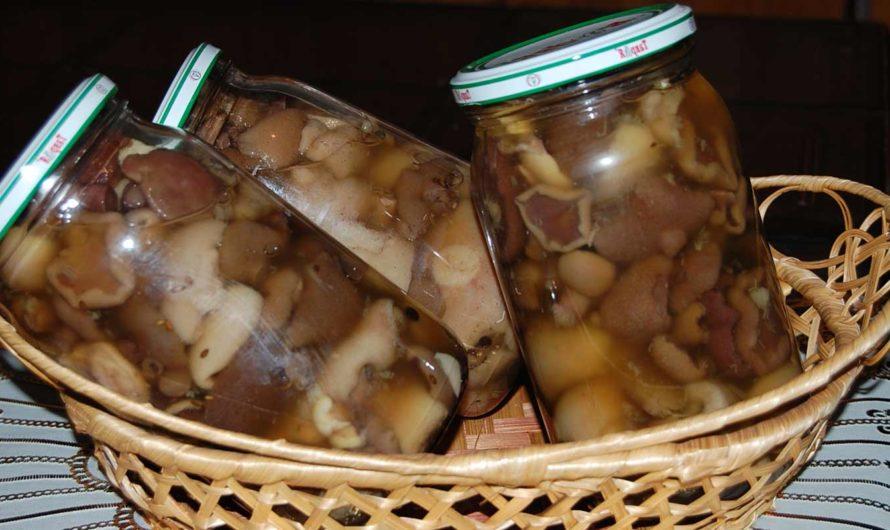 Грибная поляна заготовок на зиму: рецепты приготовления сушеных, маринованных и квашеных грибов